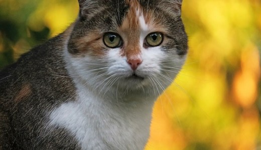 猫が水をよく飲む・飲みすぎると注意!原因や病気の可能性は?
