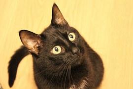 猫の乳がん(乳腺腫瘍)の治療や手術費用、悪性や転移について!