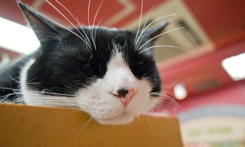 猫の慢性腎不全について!症状〜治療〜経過や末期の看取りまで!