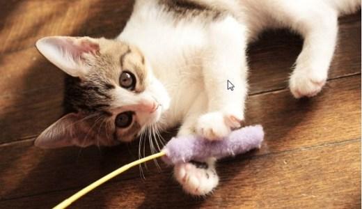 千葉県内の猫カフェ案内!おすすめ人気店の料金やシステムなど!