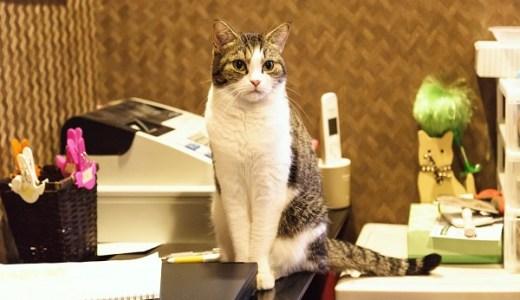 猫カフェ・保護猫カフェ福岡!システムや料金などご案内!