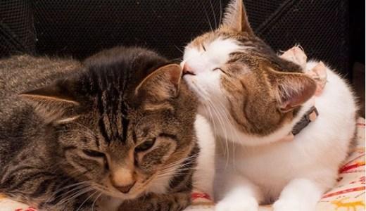 猫の避妊・去勢手術について~絶食や手術、退院後のケアまで~