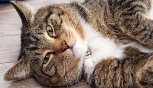 オス猫の発情期における行動の変化や鳴き声・周期について!