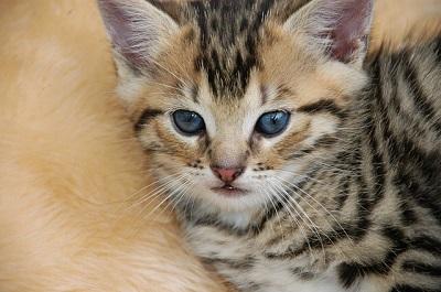 cat-1094764_640