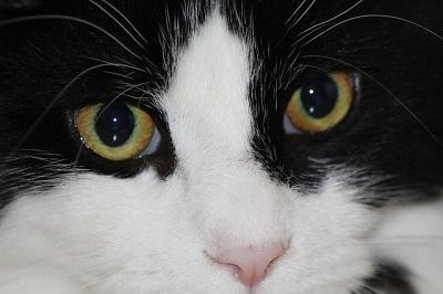 cat-221919_640