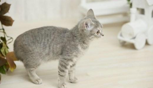 猫の飼育にかかる費用は月額いくら?必要な維持費や急な出費!