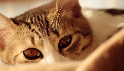 猫の喘息!アレルギー性気管支炎の原因や治療法と予防まで!