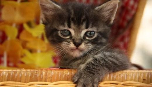 仙台・東北の猫専門病院まとめ!デリケートな猫への配慮も!