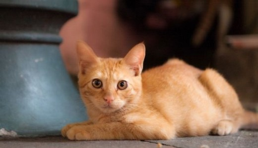 猫の病気で人間に移るのは?意外に多い人畜共通感染症とは!