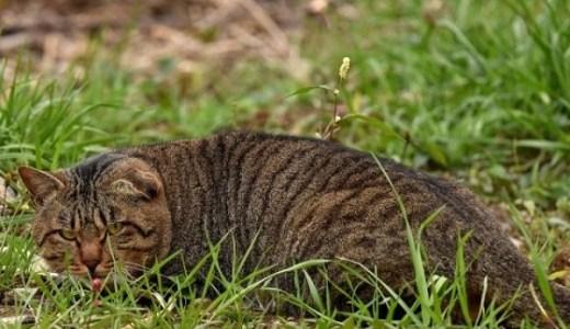 猫に必要な栄養素とキャットフードの矛盾!炭水化物は不要?