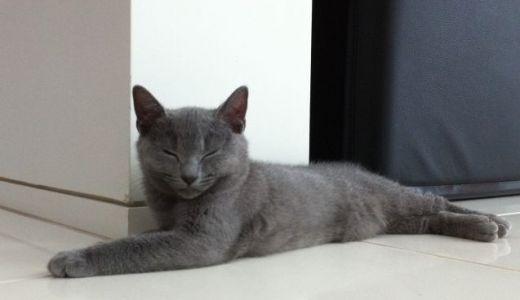 猫のけいれんやひきつけなどの発作の原因や考えられる病気!