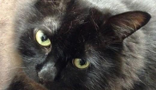 猫の認知症(痴呆)が増えてきている!症状や原因と対処法!