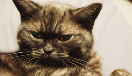 猫の病気で落ち着きがない症状があるのは?高齢猫は要注意!