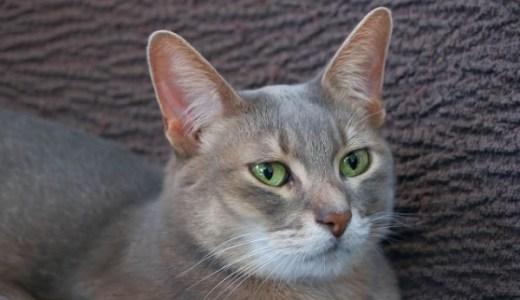 猫の鼻血の原因や考えられる病気!注意するべき症状とは?