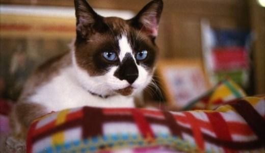 猫の嘔吐!胃液を吐く原因や対処法と考えられる病気!