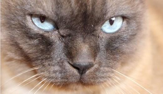 猫の嘔吐と食欲不振!原因や考えられる病気と受診のススメ!