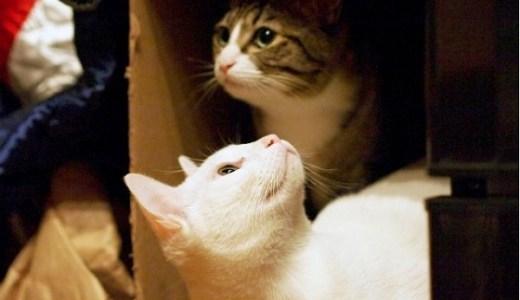 岐阜県内の猫カフェ・保護猫カフェ!癒される人気店のご案内!