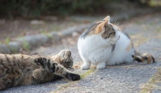 猫の島!男木島の猫が増えすぎにより全ての猫に不妊手術を決行!