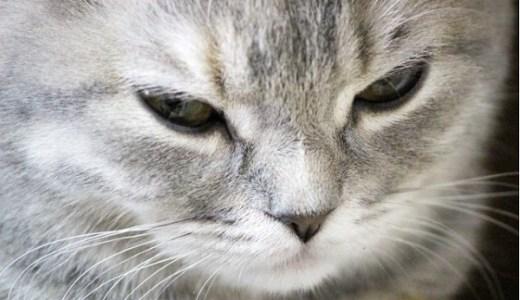 猫の目に黒い点がある!考えられる原因や病気とは?