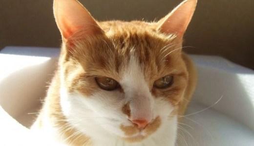 猫の目の白濁・濁りや充血!考えられる原因や病気は?