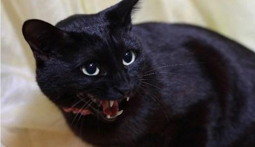 猫の口腔がん!悪性黒色腫(メラノーマ)の原因や症状と治療法!