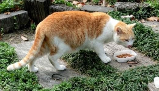愛猫を病気にさせない!健康維持や長寿のためのキャットフード!