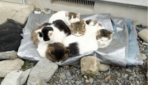ハワイの猫の楽園ラナイ島がスゴイ!保護ねこ施設で猫まみれ!