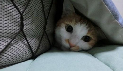 京都府で夜間の救急対応が可能な動物病院まとめ!
