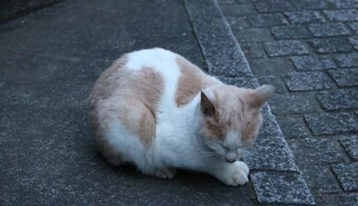 ペットの夜間の救急診療も!和歌山県内の動物病院!