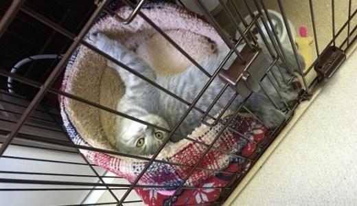 地震や災害時に猫と一緒に避難するために絶対必要なもの!
