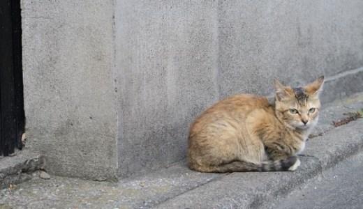 嘉例川駅のアイドル!観光大使に就任の看板猫の仕事っぷりは?