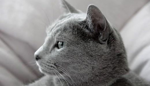 猫の耳の外側のできもの,かさぶた,黒いなどで考えられる原因!