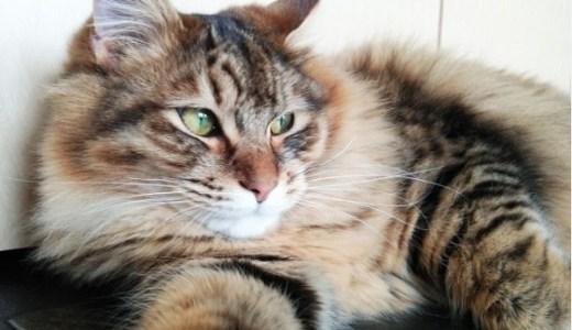 慢性腎不全の猫のよだれについて!原因や対処、治療法は?