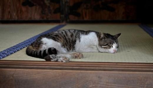 猫の老衰は何歳から?前兆はある?症状や年齢と寿命について!