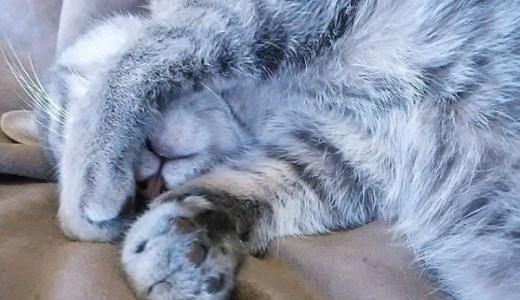 猫の避妊,去勢手術後に見られる性格や行動などの変化とは?