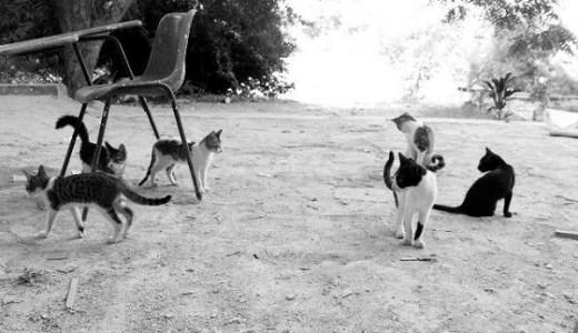 猫の多頭飼育崩壊!原因は驚異の繁殖力と兄弟、親子の近親交配!