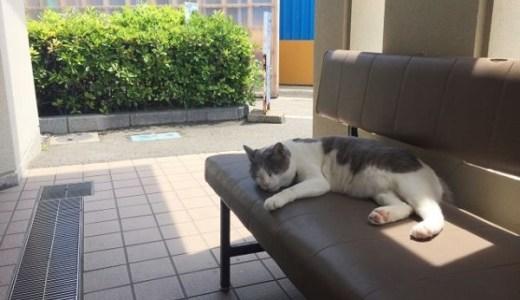 猫が後ろ足を痛がる,引きずる,立てないなど異常の原因とは?