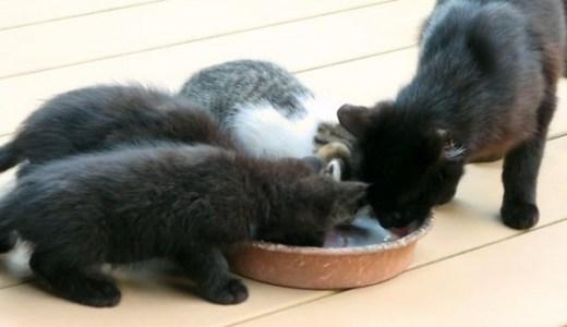 猫の口臭とキャットフードの関連性!食事選びの重要性とは?