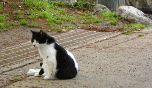 猫の事故や打撲,外傷などによる血尿の危険性と注意すること!