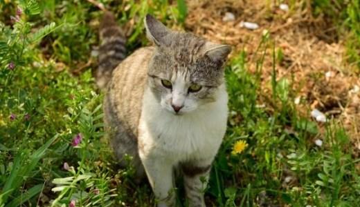 長崎のネコ駅長は地域猫のネルくん!利用客を和ませ人気者に!