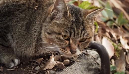 小笠原のねこ待合所とは?ネコと野生動物を守る取り組み!