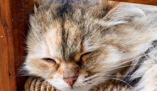 猫の抜け毛が多い、ひどい!病気の可能性や考えられる原因は?