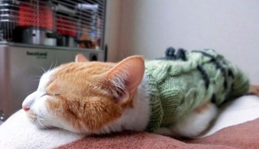 猫が冬に太る(肥満)のは本能?健康管理や注意すること!