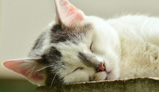 猫の睡眠時の状態!寝言や寝息、いびきなど病気の可能性は?