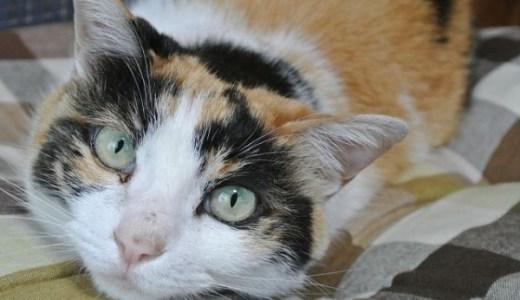 猫が風邪をひいて食欲がない,ごはんを食べない時の対処法は?