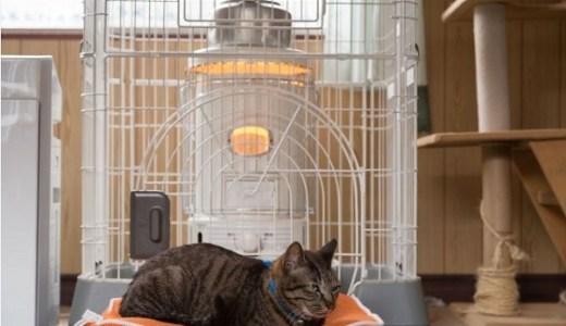 猫の低温やけど!湯たんぽやカーペットなど温度や症状と治療!
