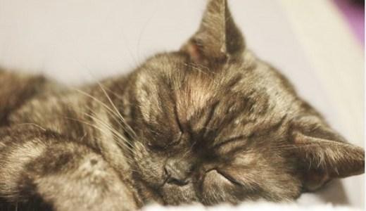 猫が風邪をひいて水を飲まない!対処法や注意すること!