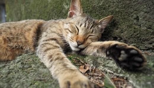 岩合光昭氏が撮影に使うカメラや機材,猫の撮り方の極意とは?