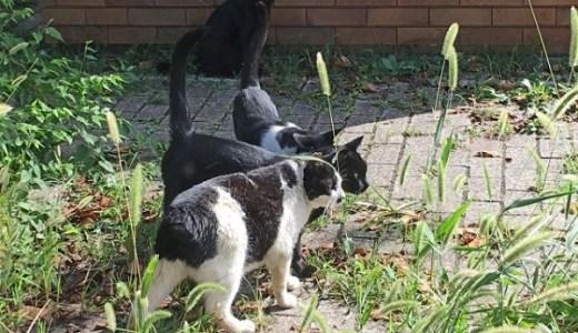 地域猫と野良猫の見分け方は?耳カットで性別が分かるの?