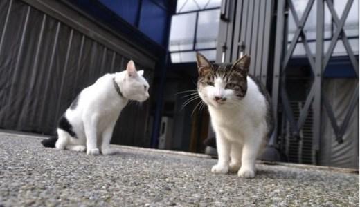 地域猫を飼いたい!引き取ることはできる?病気や寿命は?